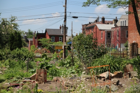 Mexican war community garden