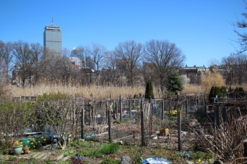 Boston - Community Garden